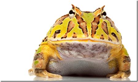 bigfrog_thumb
